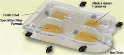 BuggyBeds is an early detection glue trap that lures & traps bed bugs.