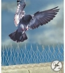 Bird B Gone - Bird Spikes are designed for large birds such as pigeons, crows, and gulls and are ideal for preventing birds from landing on window sills, rooflines, ledges, fences, under eaves and other areas.   50 feet per case